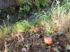borovice-13-10-25