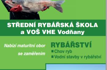 borovice 24_10_15